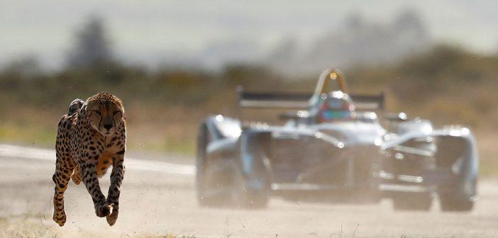 Formula E V.s Cheetah